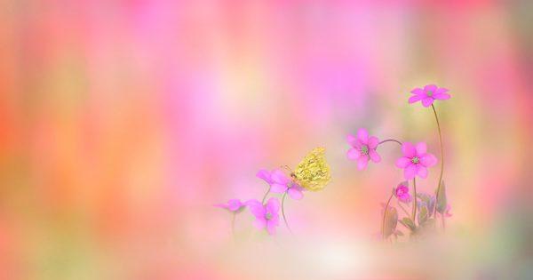 Marieke op het Strand, HSP, Den Haag, Marieke Verkerk, Intuïtie, cursus, Heel de natuur in jou, workshop, Van Hobbel naar H.I.P, hooggevoelig, luisterkind, luisterkind-afstemming, aarden, gronden, aardingsproducten, Earthing Nederland, kortingscode, alternatief advent vieren, HSP Challenge Maandje Minderen, Maya Inzichten spel, 2012 Inspiration cards, bijenvoedselbank, Pollinators, Corona, voor jezelf zorgen, healing garden, Dr Bates methode, bril, HSP Zomer-bingo, lifecoach, dyslexie, levensvragen, bomen
